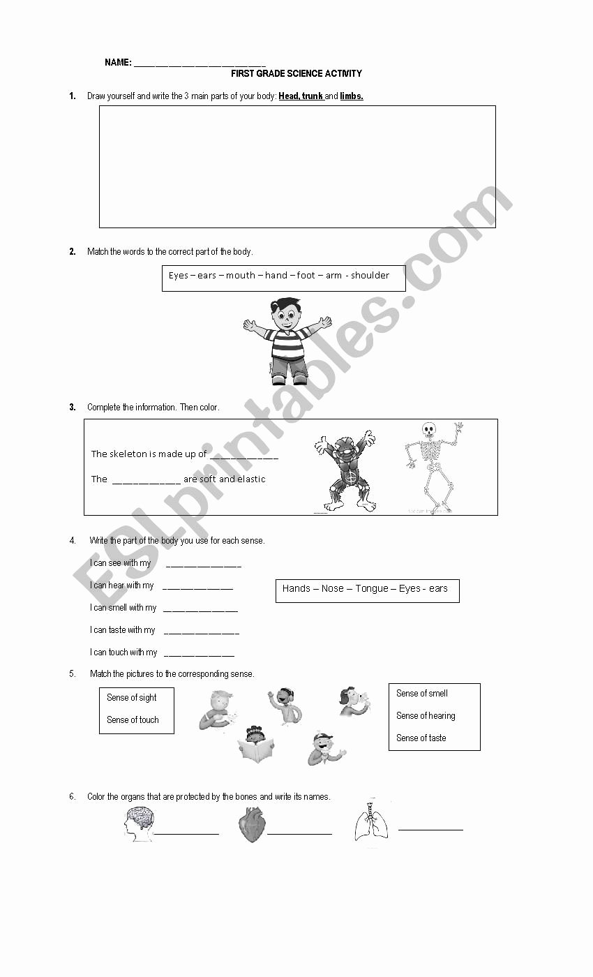 Multiplication Worksheets 3s Awesome First Grade Science Worksheet Esl by Anpamaji Worksheets